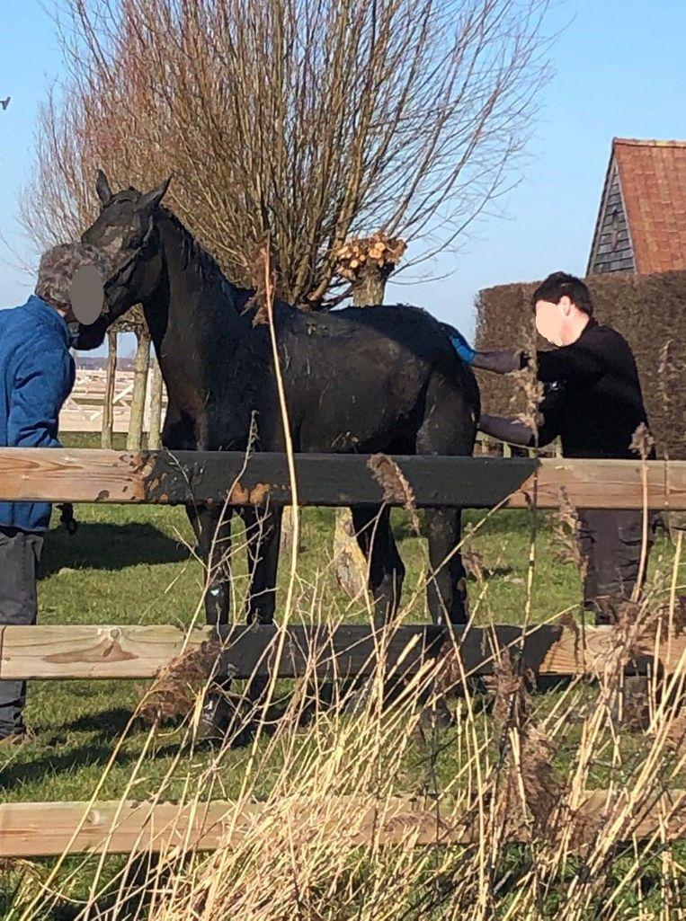 Het paard was wat onderkoeld, maar stelt het verder goed.