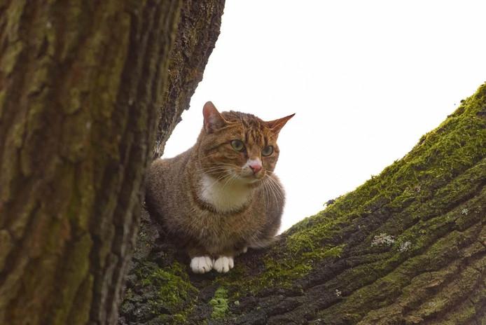 De kat zat in een boom langs de Allerheiligenweg in Breda.
