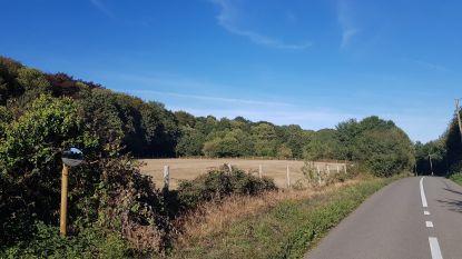 Bos op Kemmelberg wordt uitgedund voor gezonder bomenbestand