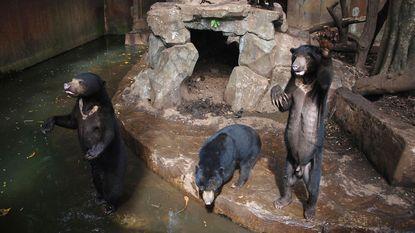 """Zoo van broodmagere beren slaat terug: """"Dikke dieren zijn ook niet gezond"""""""