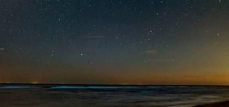 Zeevonk siert de Zeeuwse kusten