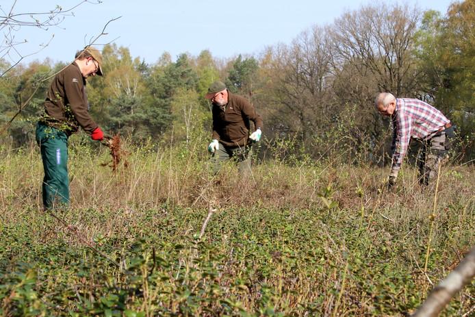 Een groepje vaste gasten van chaletpark 't Markslag helpt Natuurmonumenten om de woensdag met onderhoud in het Witte Veen. Vanaf links: Ben Draayers, Agge Dokter en Gerrit-Jan van Heek.