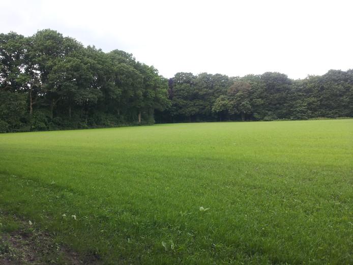 Omwonenden vrezen dat de natuur plaats moet maken voor een weiland zoals die ook in het Kapellebos te vinden is.