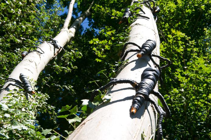 Anja Middelkoop uit Millingen aan de Rijn maakte van fietsbanden deze 'mormels', ondefinieerbare wezentjes die in het bos leven. Ze zijn gebaseerd op onbekende diertjes die je in het bos of in je tuin tegen kan komen.