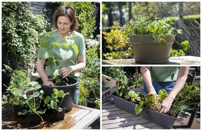 Weinig plaats of geen tuin? Ook zonder moestuin kun je groenten kweken, zegt tuinexperte Laurence Machiels.