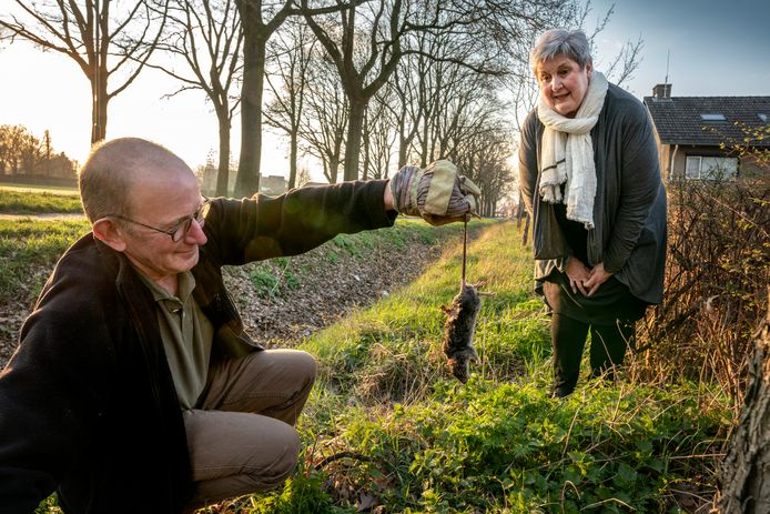 Henrie en Corrie van Geffen bij de sloot aan de Eerdsebaan in Wijbosch, waar de ratten vandaan komen en zich een weg banen onder de grond naar hun huis.