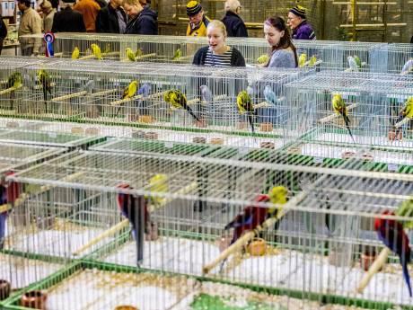 Vogeldieven slaan toe op Zwolse vogelbeurs