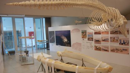 Expo 'Kijk, een walvis' is deze zomer een mooie blikvanger in de Vosseslag