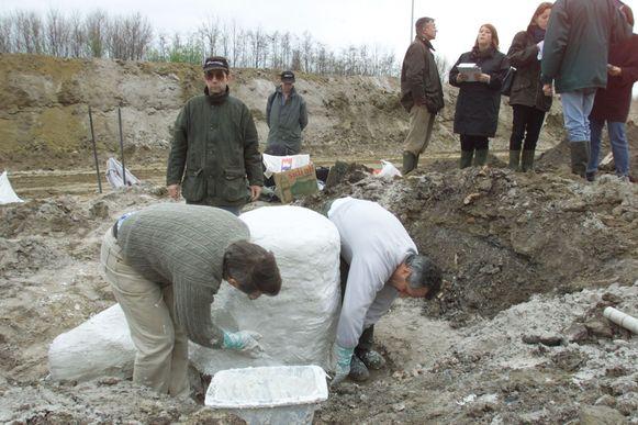 Tijdens de opgravingen van het versteende woud
