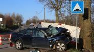 Bestuurder (35) overleden na klap tegen boom in Zoutleeuw