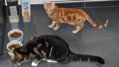 Stad geeft tot 42 euro subsidie voor steriliseren, chippen en registreren van kat