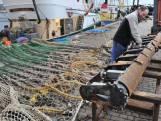 Vissers pleiten voor pulsvrije zone langs de kust