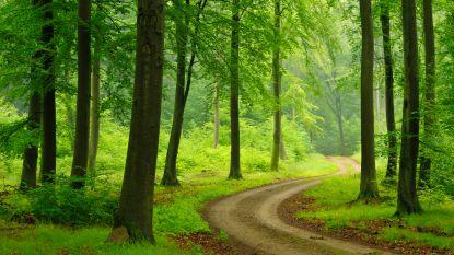 Bomen worden gekapt in park De Valkaart
