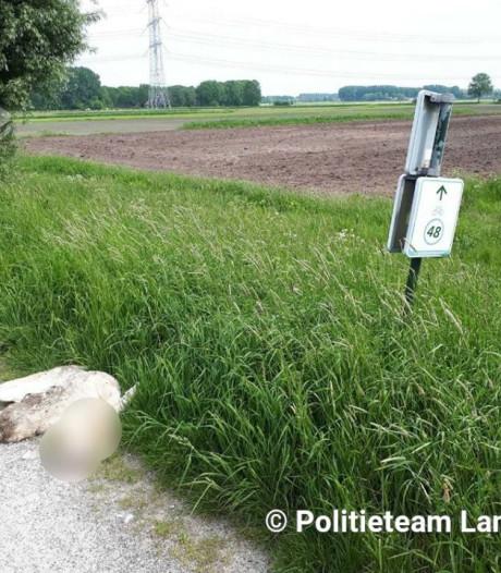 Wandelaars op de Dongedijk opgeschrikt door doodgebeten zwaan