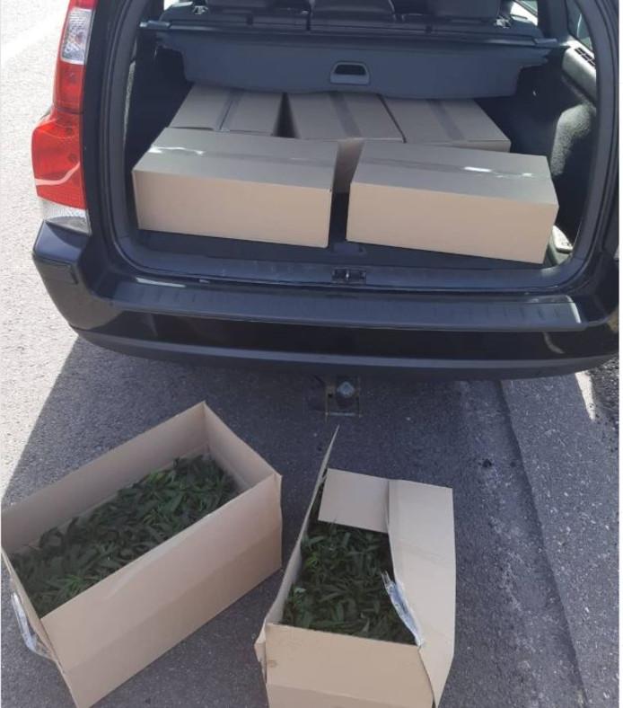 De politie ontdekte de dozen met hennepplantjes bij toeval, toen ze de bestuurder aanhielden omdat hij zat te bellen achter het stuur.