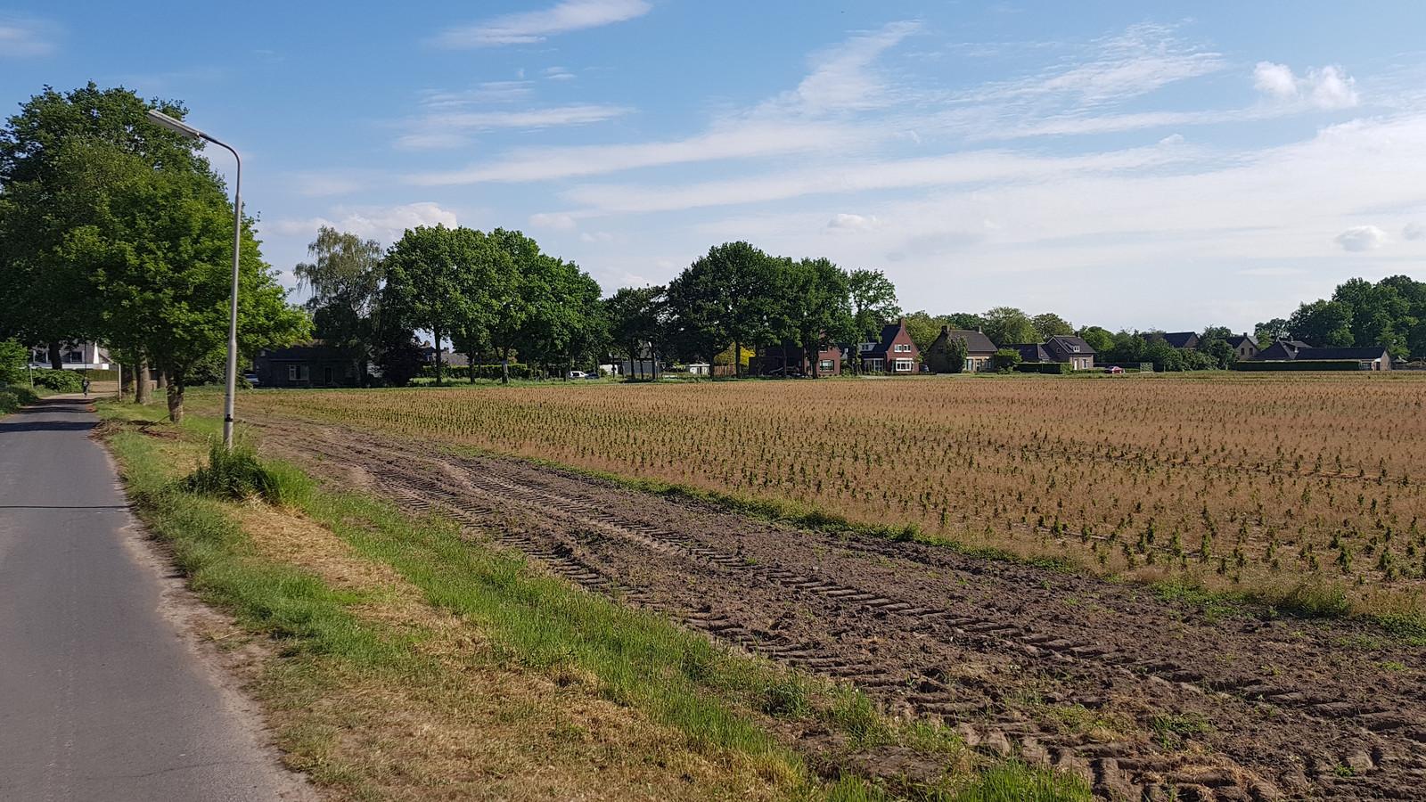 De eerste buurtbewoners wonen zo'n honderd meter van Haarendael.