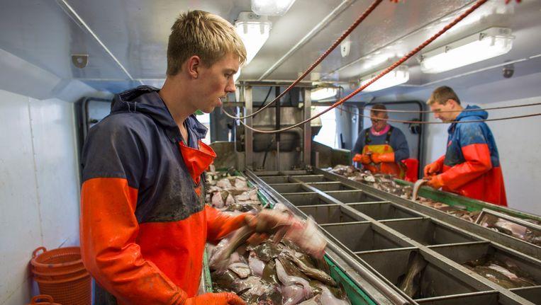 De bemanning van het Texelse vissersschip TX1 vist een week op de Noordzee nabij de Engelse kust. De vis wordt gescheiden van de bijvangst die weer overboord wordt gegooid. Beeld Ton Koene