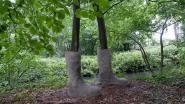 Artistieke wandeltocht in park d'Ursel: bomen met botten en onderbroeken