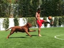 Messi dolt zijn hond Hulk