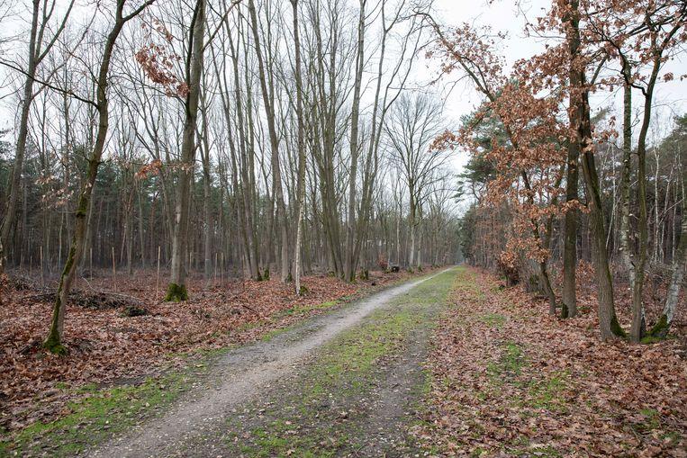 De paden in de bossen van Schoonbeek zijn in hun oorspronkelijke staat hersteld.