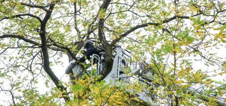 Politie haalt betoger uit metershoge boom in Rotterdam-Noord