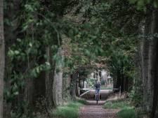 Einde aan getouwtrek om 'gevaarlijke' bomenlaan in Hengelo