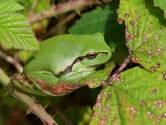 Ecoloog Jan Stronks heeft er lol in: 'Kijk bij landschapsbeheer door de ogen van een boomkikker'