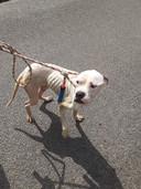 Een van de verwaarloosde honden.