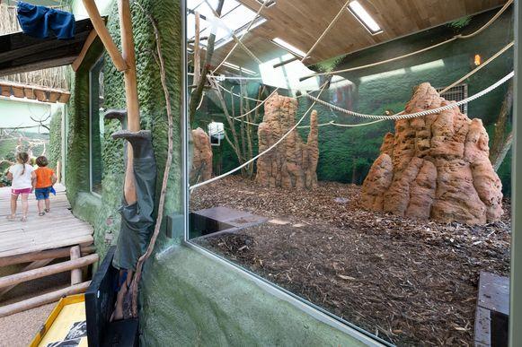 MUIZEN Het nieuwe bonoboverblijf Expeditie Bonobo in ZOO Planckendael wordt in gebruik genomen