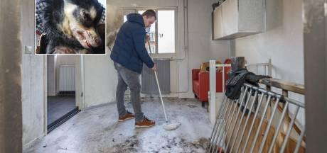 Forse strafeis voor molotovbranden bij vader en zoon in Zwolle