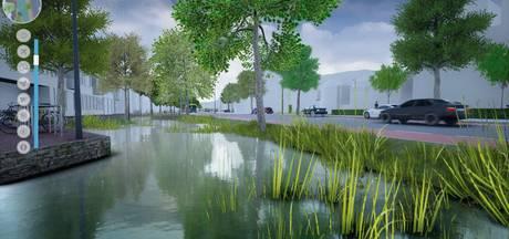 Bomen aan Oldenzaalsestraat in Enschede moeten wijken
