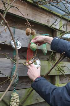 Vers vogelzaad en nieuw potje pindakaas: tuinvogeltelling is vreetfestijn, met boomklever als toetje voor de teller