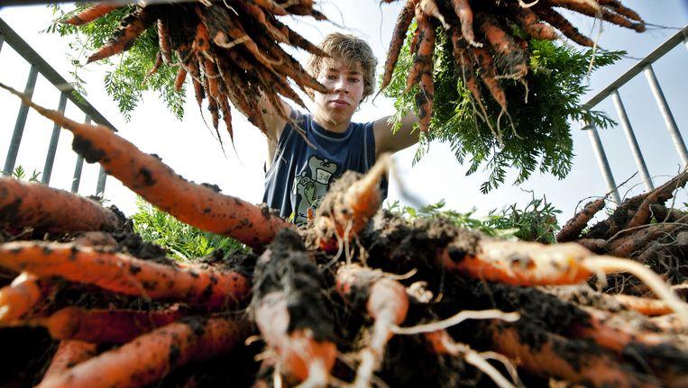 Een jongere aan het werk bij een tuindersbedrijf. Beeld anp
