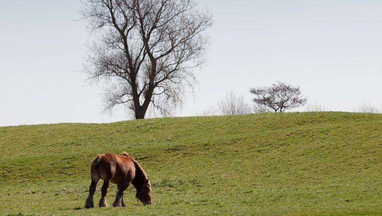 Gronings landschap bij de Uithuizerpolder. Beeld Harry Cock / de Volkskrant