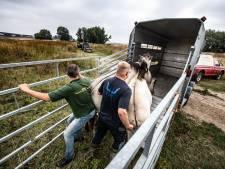 Roep om hek op Waalstrand  om mens en paard te scheiden