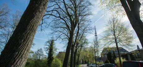 Waalwijk telt bijna 30.000 bomen en 234 voetbalvelden aan gazon