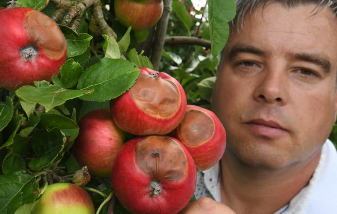 Fruitteler William Pouw ziet dat een groot deel van zijn appeloogst verbrand is tijdens de extreme hitte van vorige week.