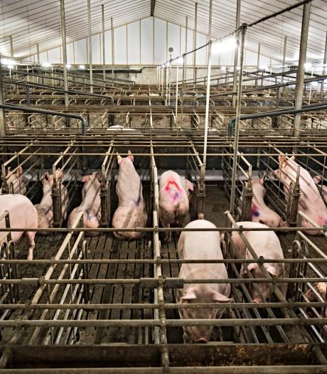 Fors voorbehoud rechter bij strengere regels voor uitbreidende boeren