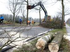 In Oldebroek gaan binnenkort 100  bomen om: is dat nou nodig?