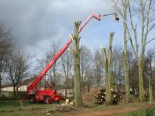 62 bomen worden gekapt in Etten-Leur