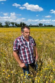 Boer uit Leende teelt nu ook bloemen voor de bij én graan voor de groenling