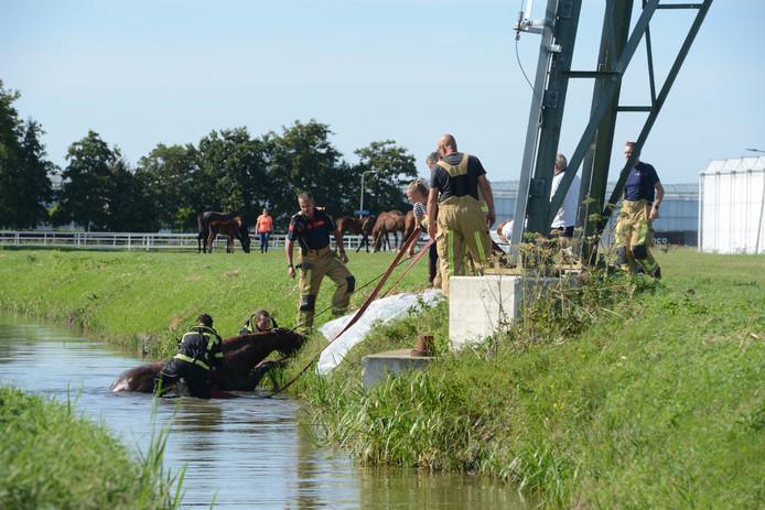 Met brandweerkracht en een speciale paardenbroek werd het dier uit het water gehesen
