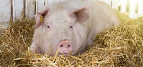 Weg met de stank: zak geld voor varkensboer die stopt