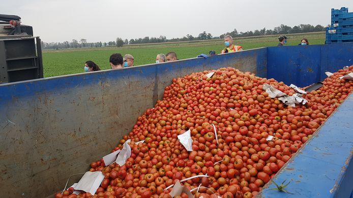 Alle tomaten worden in containers gegooid om vernietigd te worden.