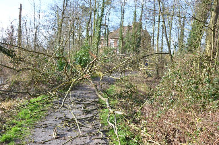 In het Verloren Bos zijn verschillende paden versperd door bomen die geveld werden door de storm.