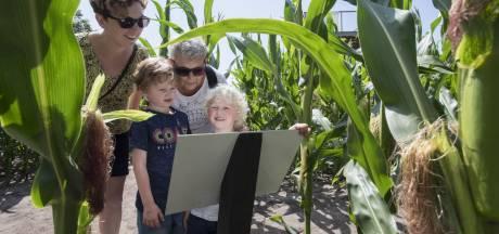 Geen maïsdoolhof, maar kinderboerderij Dondertman in Holten denkt nieuwe publiekstrekker te hebben