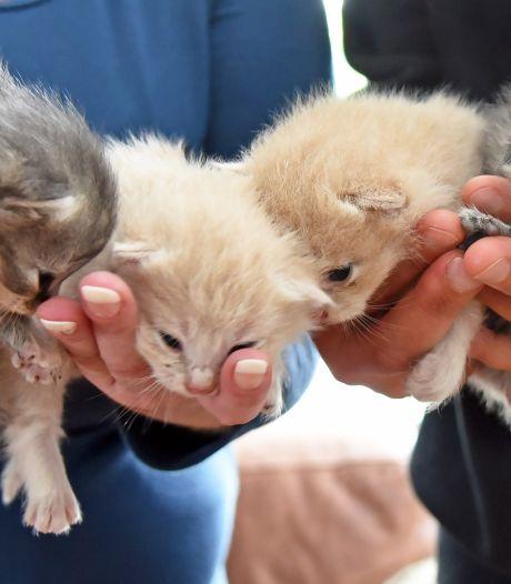 Poging om moederpoes te herenigen met geredde 'vuilstortkittens': zoektocht is geopend