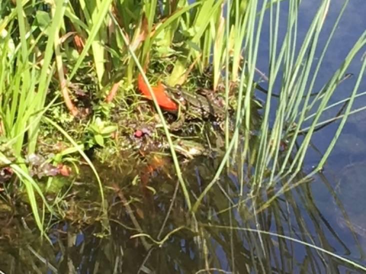 Kikkers lusten ook vissen, zo merkt Willy