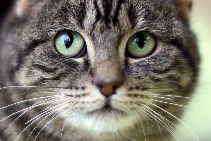 Omdat meerdere provincies plannen zouden hebben om verwilderde zwerfkatten af te schieten en de gevolgen voor de gewone huiskat wordt gevreesd, houdt de stichting zwerfkatten Nederland een onderzoek onder bezitters van huiskatten.