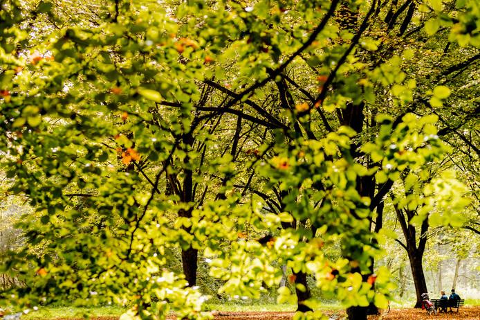 Het Amsterdamse Bos. Als het aan Marco Lemmers van Conscious Hotels ligt, komt er in of rondom Amsterdam nog een bos.